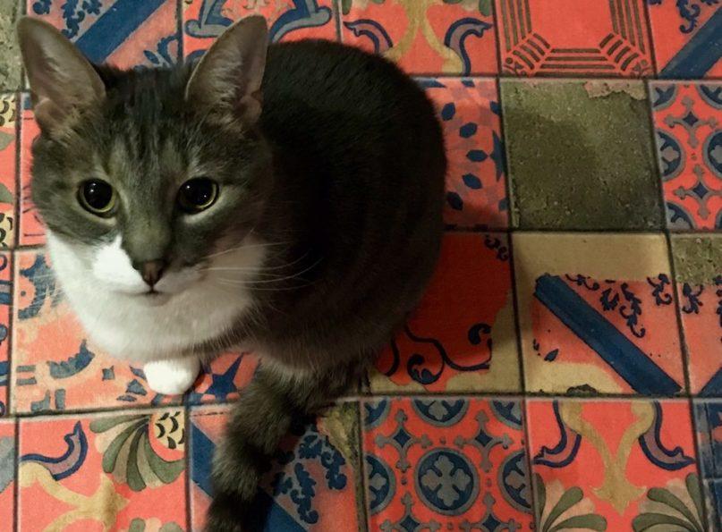 Yoga Mat Cat